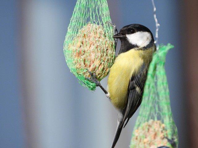 KONKURS EKOLOGICZNY ''Zimowe dokarmianie ptaków